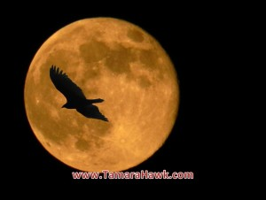 Full Moon Hawk