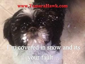 Snow Calvin